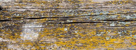 Texture natural wood graphic resources close-up detail Stock fotó
