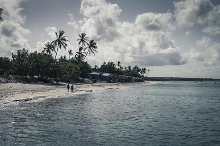 Caribbean beach with palm line