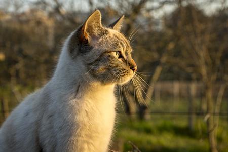 Cat looking far away in an outdoor environment.