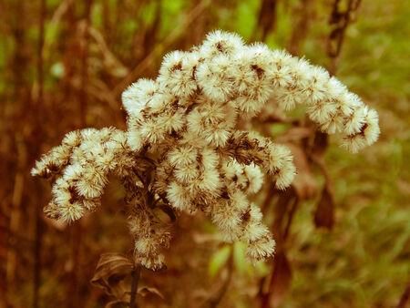 yesteryear: flor anta�o vendimia Foto de archivo