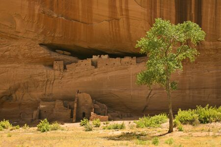 anasazi ruins: White House ruins, Canyon de Chelly National Monument, which are ruins of dwellings built by the AncientPueblo People, or Anasazi