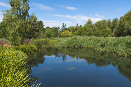 wildfowl: A small pond in London Wetlands Center - WWT nature reserve Stock Photo
