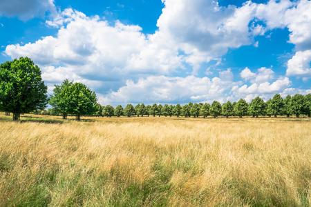 south london: Hampton Court Park in South London, UK