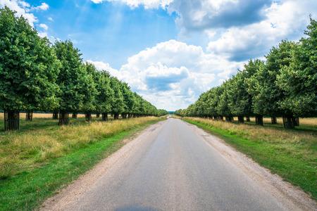 south london: A road through Hampton Court Park in South London, UK Stock Photo