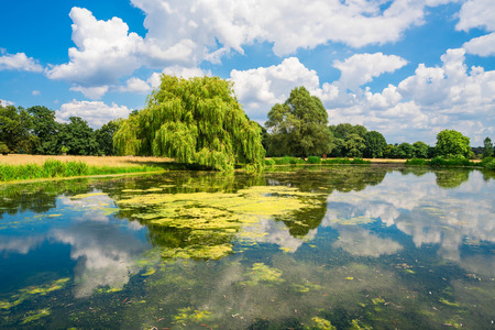 south london: A pond in Hampton Court Park in South London, UK
