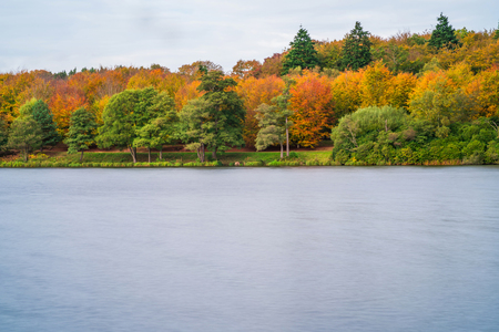 windsor: A lake in Virginia Water in Surrey in fall colors, UK