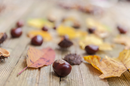 conkers: Chestnuts on a brown wooden table with some leaves. Stock Photo