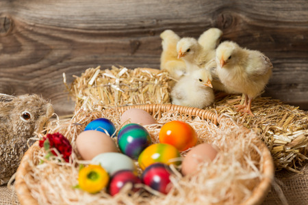 incubate: Young fledglings with easter eggs in a easter nest. Stock Photo