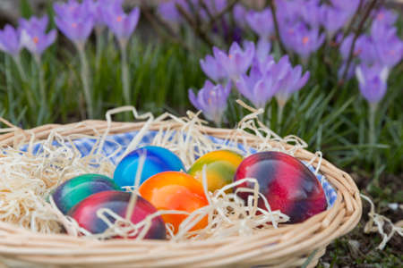Colored easter eggs lying in the grass between flowers. photo