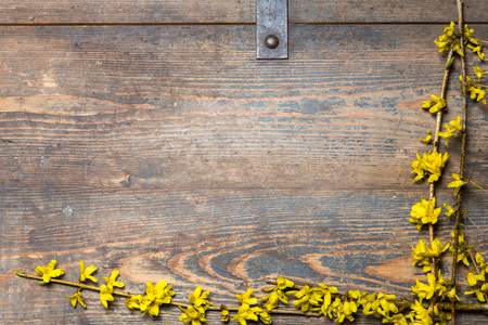 Yellow blossoms on a wooden chest photo
