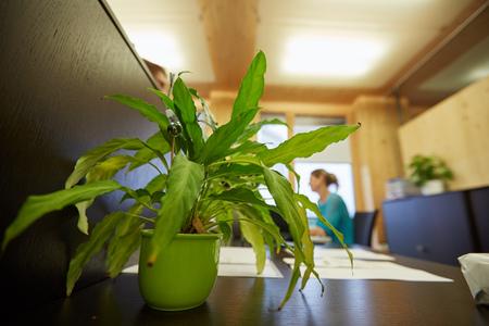 사무실에서 식물