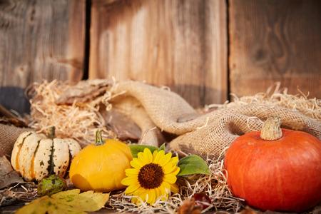 blanks: Pumpkin and sunflower autumn still life on old old wooden blanks