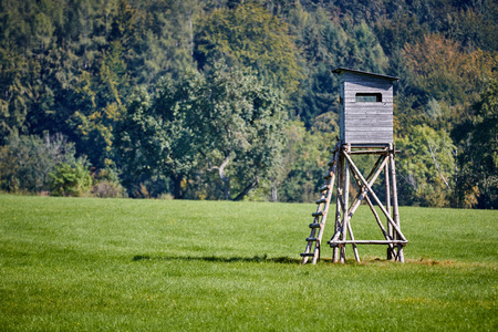 deer stand: Deer stand on a meadow in front of a green forest