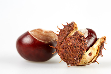 horse chestnut seed: Isolated brown chestnut with peel on white background