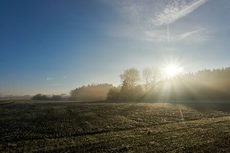 tress: Panoramic view of morning sun through fog and tress over field and acres