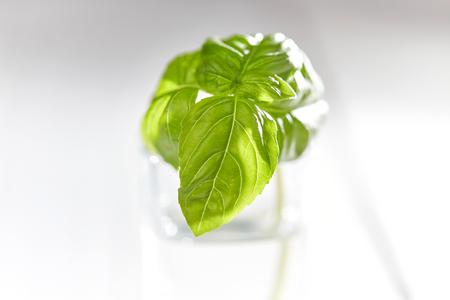 Witte tafel met glas en groene basilicum Stockfoto