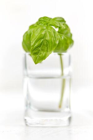 Isolated basil in glas of water on white wooden table Stock Photo