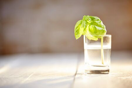 Basil on white table in front of brown brick wall