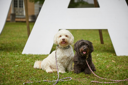 Two dogs saying yes ja to marriage in park Stock Photo - 100290236