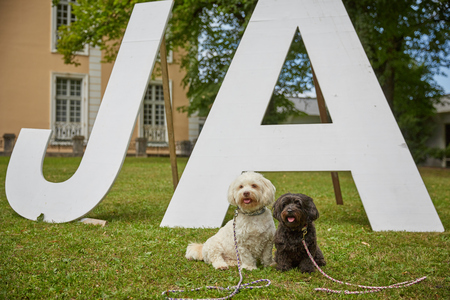 Two dogs saying yes ja to marriage in park Stock Photo - 100288217