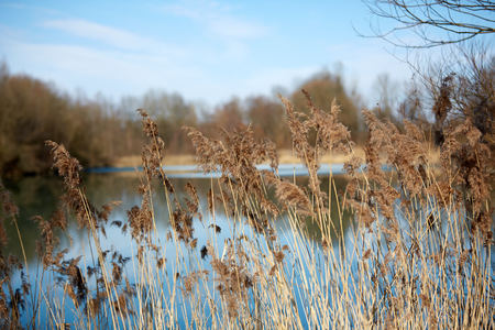 Reed at lake in winter Stock Photo - 126328959