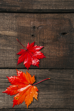 Autumn leaves on old vintage wooden background.