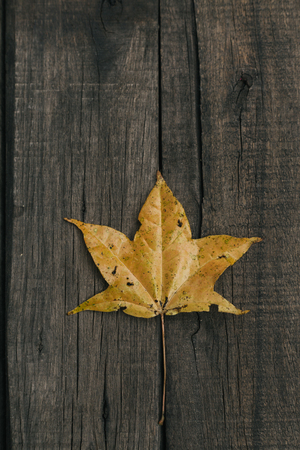 Autumn leaves on old vintage wooden background. Copy space. Top view.