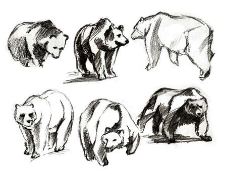The drawn bears. Different foreshortenings photo
