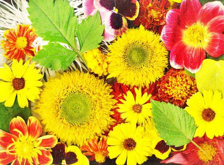 Autumn flowers Stock Photo - 10454574