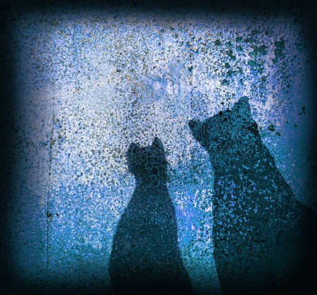 Silhouettes of cats on an old wall photo
