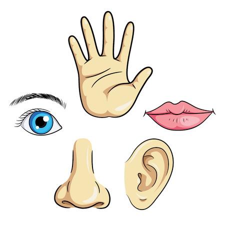 Illustratie van het oog, oor, neus, lippen de hand.