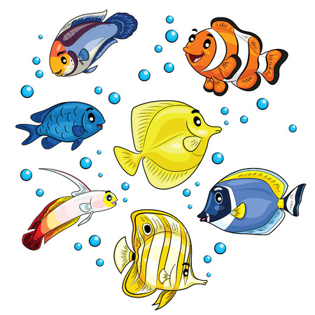 clown tang: Illustration of tropical fish. Illustration