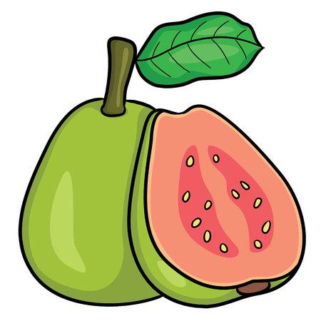 Illustration of cute cartoon guava.