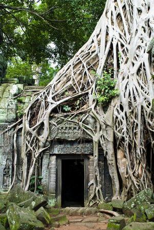 Angkor, Cambodia: Tree roots growing over and into an entrance in an ancient wall at Ta Phrom, part of the Angkor