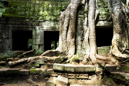 Angkor, Cambodia: Tree roots growing over and into an ancient wall at Ta Prohm, part of the Angkor Temples world heritage site. Stock Photo