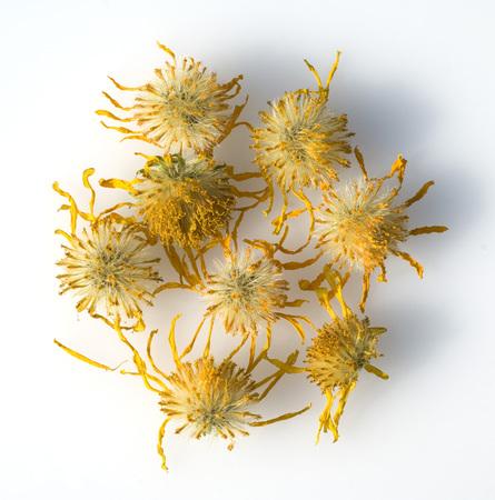 Arnica: Arnica montana plant