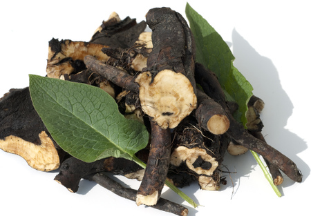 homoeopathic: Comfrey; Common; medicinal roots