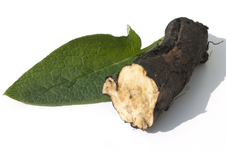 homoeopathic: Comfrey Common medicinal roots