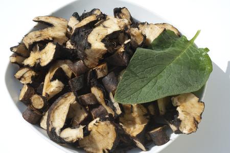 comfrey: Comfrey Common medicinal roots