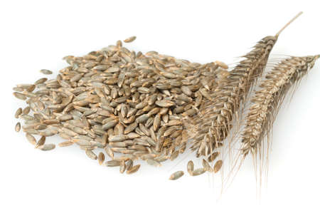 Rye, Secale Cereale, is one of the most important types of cereal with panicles.