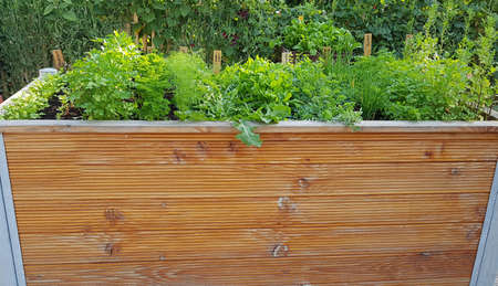 Raised bed is a vegetable or herb bed made of z. B. Wood which is easily accessible and can be ordered by people without having to bend down.
