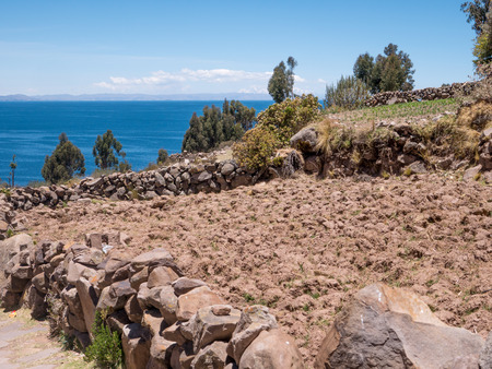 Corn Plantation at Lake Titicaca from Taquile island, Puno Region, Peru