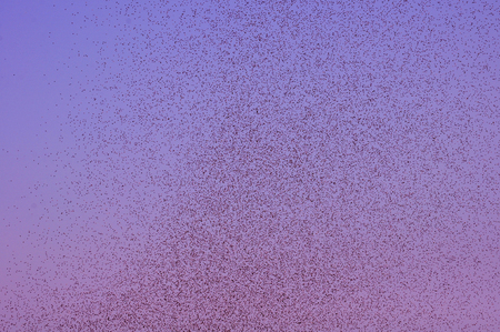 mozzie: Many large cloud of mosquitoes against colorful sky