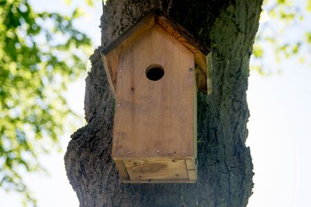pigeon holes: Bird house hanging from the tree with the entrance hole in the shape of a circle Stock Photo