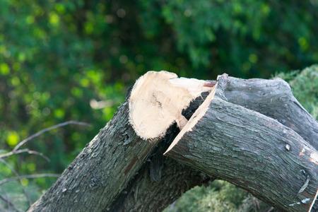 Logs trees after logging