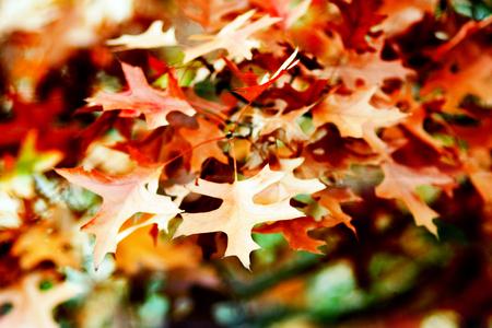 Reddish autumn leaves background Stock fotó