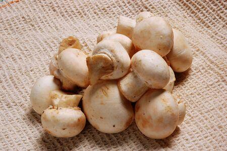 Close Up of fresh Mushrooms at kitchen