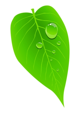dew on a leaf Stock Vector - 8645467