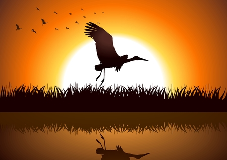 lakeside: Silhouette illustration of a stork