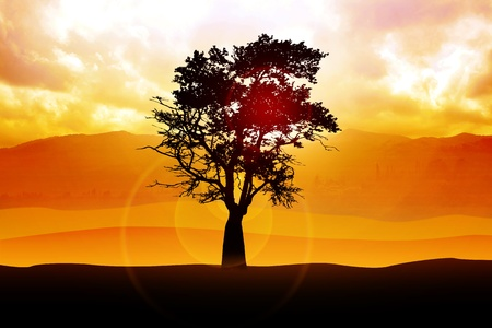 Stock image of a tree silhouette photo